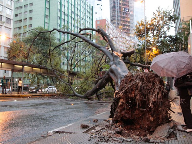 Árvore bloqueia trânsito na Avenida Nove de Julho (Foto: Marcelo Brammer/Brazil Photo Press/Estadão Conteúdo)