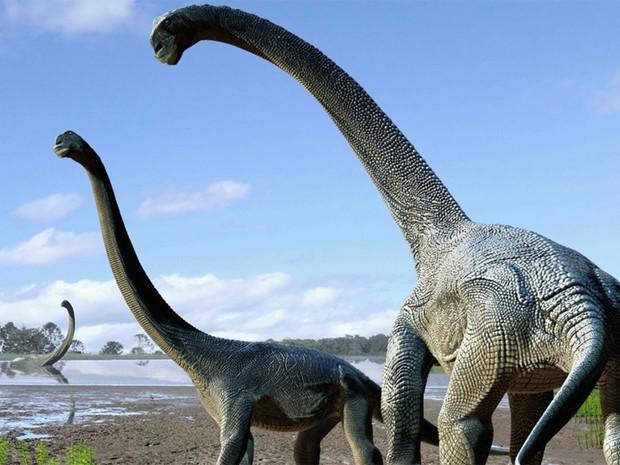 Espécia de dinossauros Savannasaurus elliottorum é gigante e tem pescoço longo (Foto:  Australian Age of Dinosaurs Museum of Natural History)