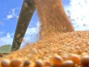Colheita de soja em Mato Grosso (Foto: Reprodução/TVCA)