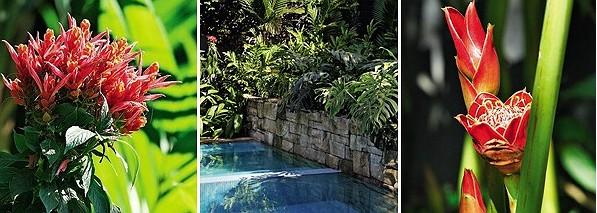 1 As inflorescências densas da afelandra-coral surgem no final do inverno e perduram até o início do verão. Vive bem a pleno sol ou meia-sombra 2 A piscina termina no muro de 2,50 m, de pedra marroada, que foi coberto de plantas, entre elas, costela-de-ad (Foto: Casa e Jardim)
