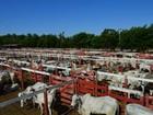 Curso credencia veterinários para atender leilões em Mato Grosso