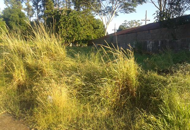 Escola Infantil Pinóquio está com mato alto (Foto: Reprodução / Aplicativo TEM Você)