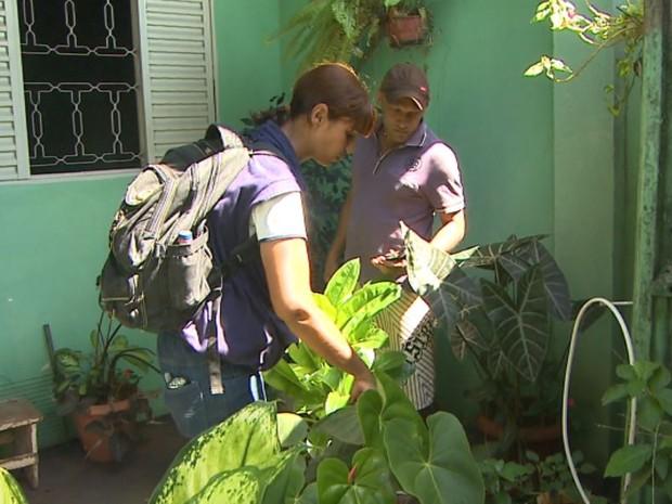 Agente vistoria casa em busca de focos do mosquito Aedes aegypti em Bebedouro, SP (Foto: Ronaldo Oliveira/EPTV)