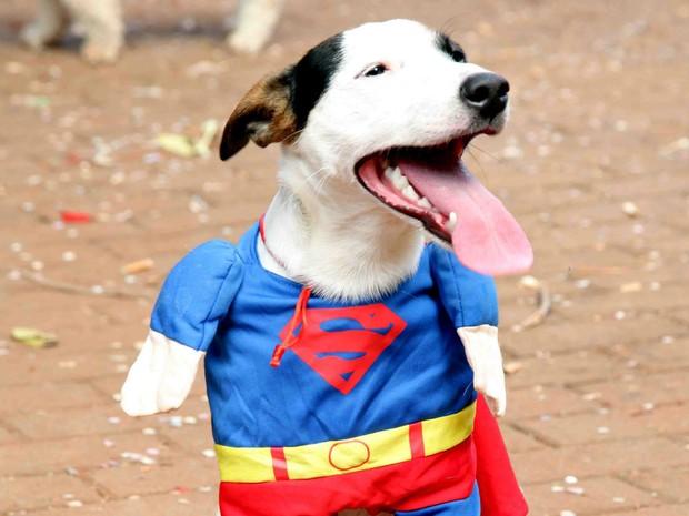 Donos levam cães fantasiados no Bloco do Bob em Campinas (Foto: Jales Silva)