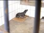 Risco de doença viral em cães aumenta durante período chuvoso