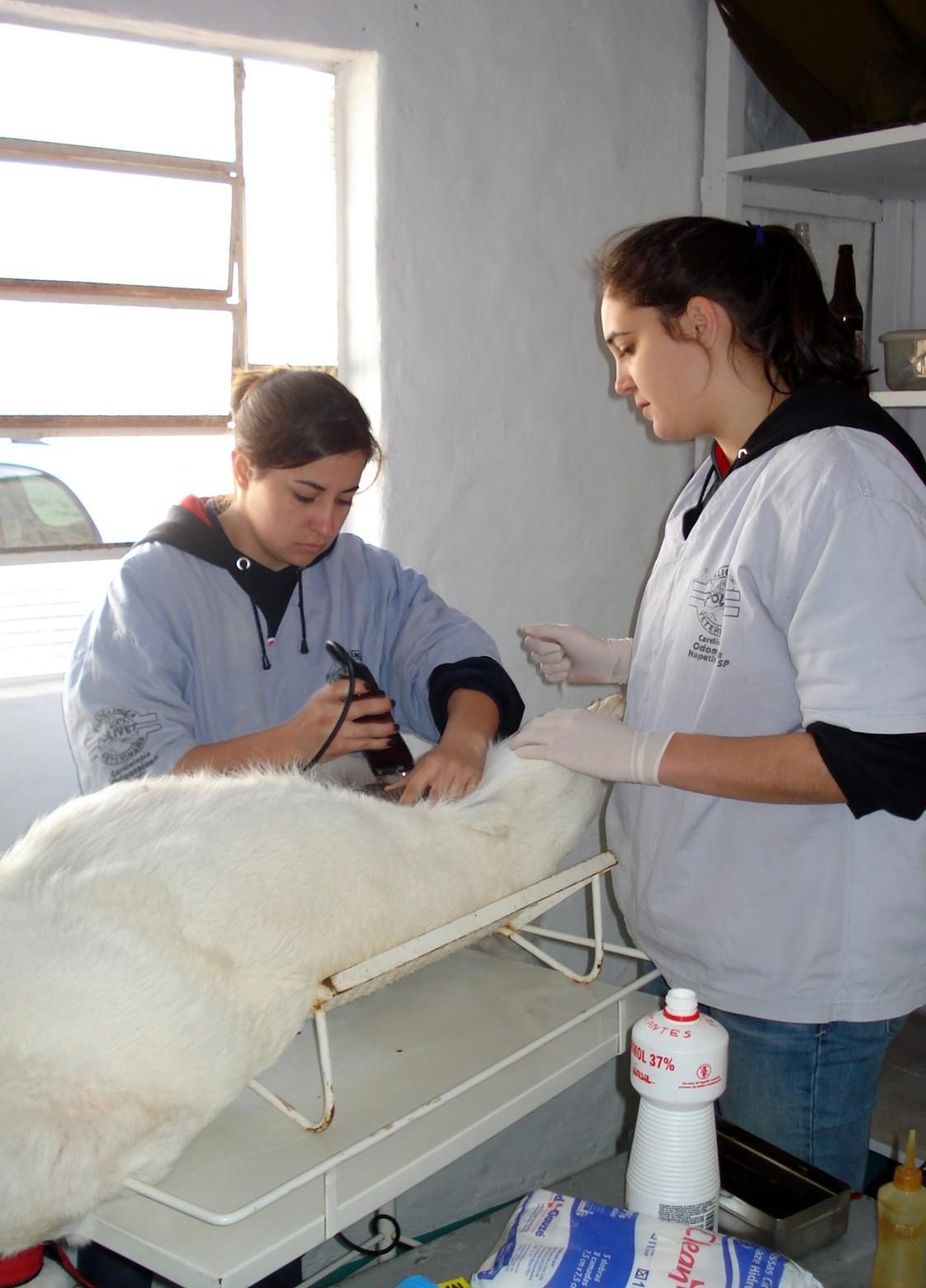 Prefeitura de Alambari (SP) desenvolve campanha para castração gratuita de animais. (Foto: Divulgação)