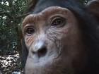 Chimpanzé é flagrado curioso diante de câmera em floresta africana