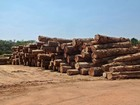 Liminar bloqueia R$ 450 mil e acusa madeireira de dano ambiental em RR