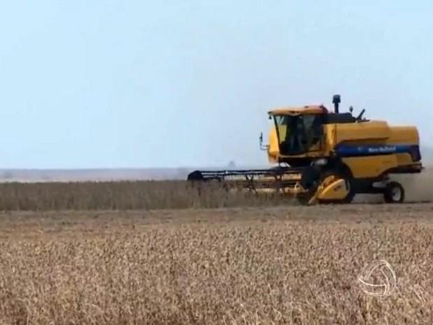 Colheita da soja em Mato Grosso do Sul está quase concluída, conforme o Siga (Foto: Reprodução/TV Morena)