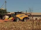 Falta de espaço em armazéns para colheita de milho em Diamantino (MT)