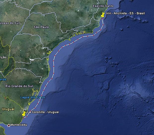 Suposto trajeto percorrido pelo pingüim-de-magalhães, cuja anilha foi encontrada na praia de La Coronilla, Uruguai. (Foto: Tainan Oliveira/ Ipram)
