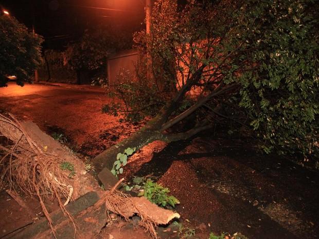 Queda de árvores foram registradas em São Carlos após chuva forte (Foto: Maurício Duch/ folharegiao.com.br)