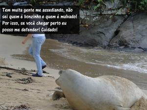 Postagens divertidas foram colocadas na página do Ipram (Foto: Luis Felipe Mayorga/ Ipram)