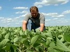 Produtores de soja estão satisfeitos com a chuva das últimas semanas