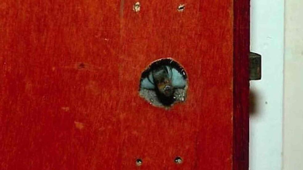 A maçaneta da porta do quarto havia sido retirada para impedir que a vítima escapasse  (Foto: Polícia da Irlanda do Norte/BBC)