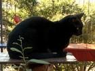Após morte de tutora, campanha em Joinville busca lar para 40 gatos