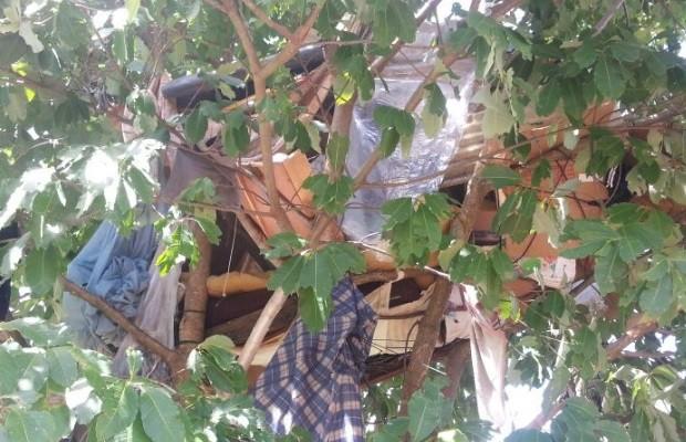 Grávida e marido que moravam em árvore são resgatados em Goiânia, Goiás (Foto: Divulgação/Semas)