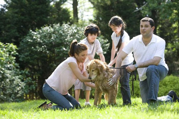 Manter os animais limpos é uma das dicas para evitar realção alérgica, segundo a Asthma UK  (Foto: CDC/ Dawn Arlotta)