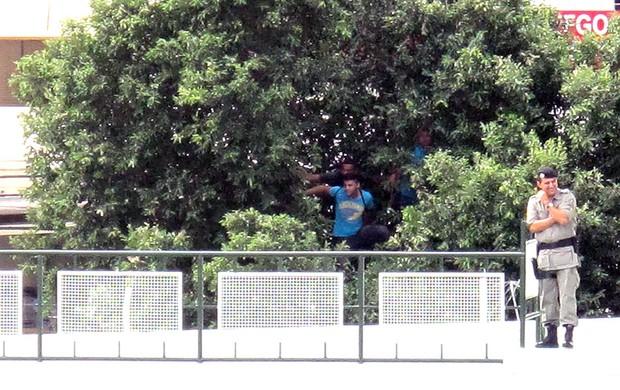 torcida árvore treino seleção brasileira (Foto: Janir Júnior)