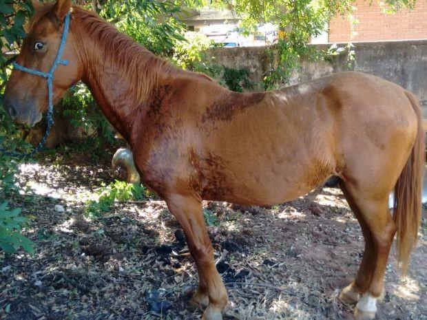 Cavalo foi furtado de chácara em Avaí (Foto: Divulgação / Polícia Militar)