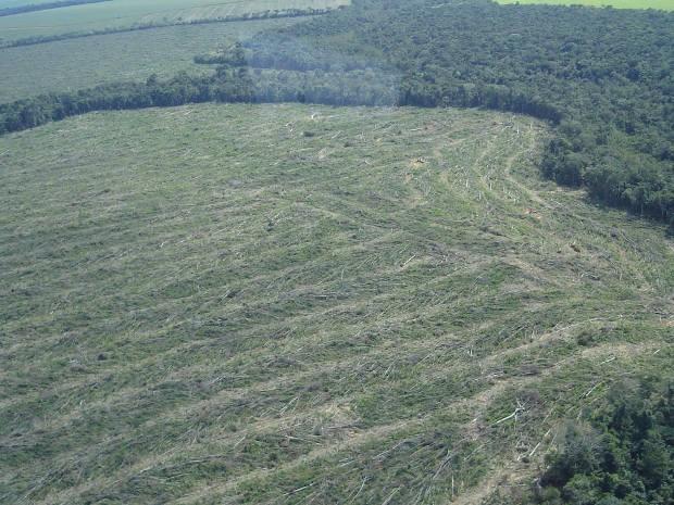 Uso do solo aumentou em mais de 4 mil hectares e focos de incêndio diminuíram em dez anos (Foto: Divulgação/IBAMA)