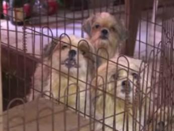 Cachorros estavam em canil clandestino (Foto: Reprodução RPC TV)