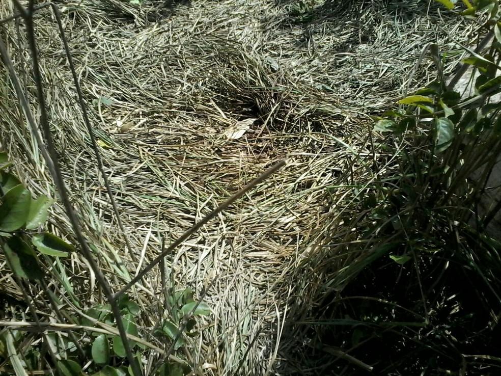 Crianças foram encontradas mortas em um matagal em Viçosa do Ceará (Foto: Evelyn Ferreira/TVM)