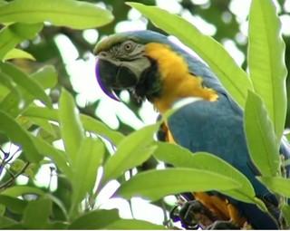 Apreensão de animais silvestres em Três Rios  (Fot Reprodução Bom Dia Rio)
