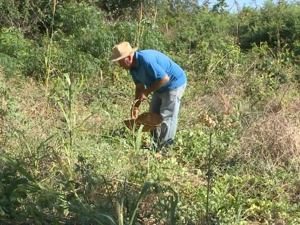 Agricultura familiar  (Foto: Reprodução)