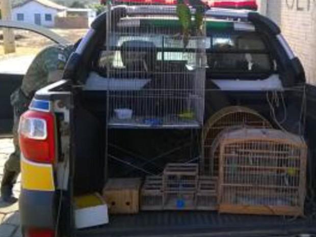 Pássaros foram encontrados em cativeiro. (Foto: Polícia Militar/Divulgação)