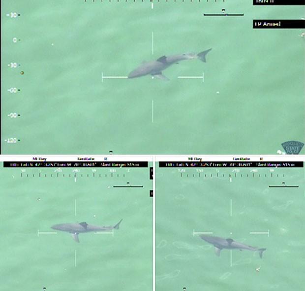 Tubarão-branco de mais de 4 metros foi flagrado perto de praia onde foi rodado o filme 'Tubarão', de 1975 (Foto: Massachusetts State Police)