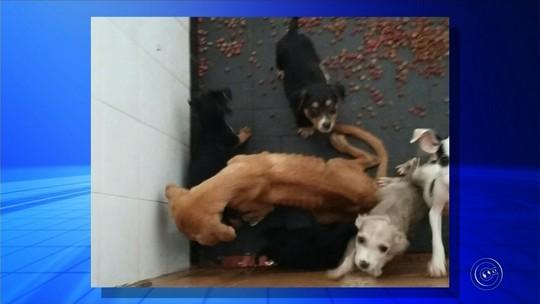 Cães com sinais de maus-tratos são resgatados de suposta ONG em Itapeva