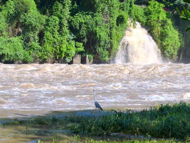 Volume do Rio Piracicaba dobrou nos últimos dias (Foto: Claudia Assencio/G1)