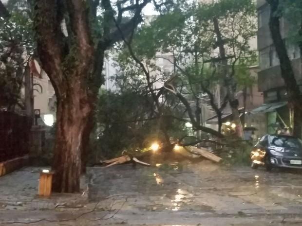 Árvore caiu na Rua Dr. Veiga Filho, em Higienópolis (Foto: Mateus Ribeiro do Vale/Arquivo pessoal)