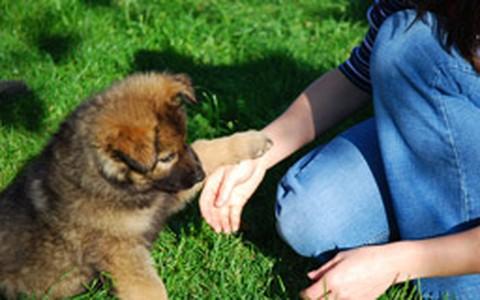 Convivência com animais de estimação estimula desenvolvimento da criança