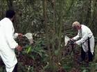 Sumiço de macacos em matas de SP dificulta pesquisa da febre amarela
