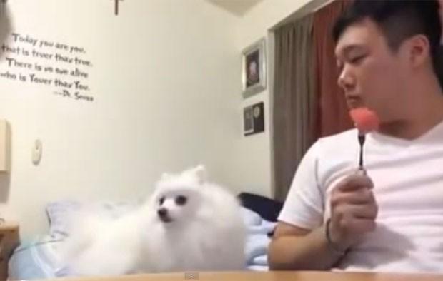 Gravação mostra o cachorro virando a cabeça seguidades vezes, mas, quando o dono olha em sua direção, o cachorro retorna a cabeça à posição original (Foto: Reprodução/YouTube/우끼끼)