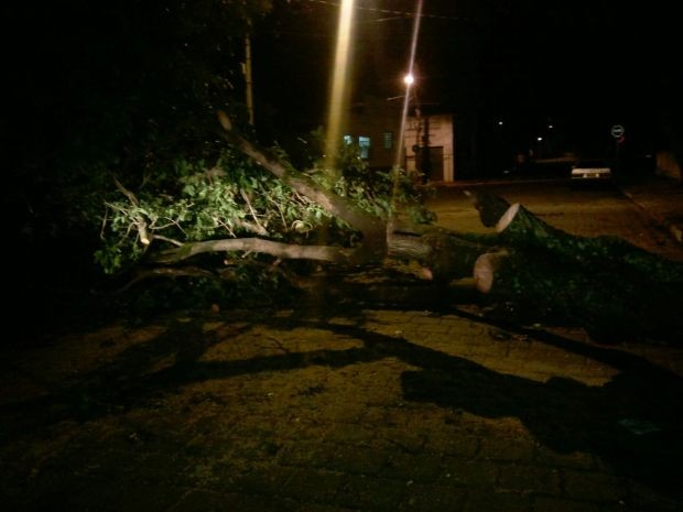 Árvores caíram em Garça com a ventania (Foto: Divulgação / Corpo de Bombeiros de Garça)