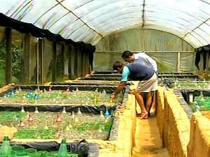Criação de peixe beta é opção de renda na Zona da Mata (Foto: Reprodução/TV Integração)