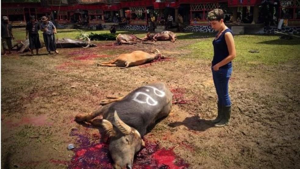 Búfalos são sacrificados como parte do ritual de enterro dos mortos; eles seriam responsáveis pela jornada das almas do mundo físico ao espiritual  (Foto: BBC)