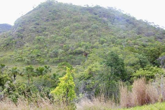 Vegetação do Cerrado (Foto: Wikipedia/Creative Commons)