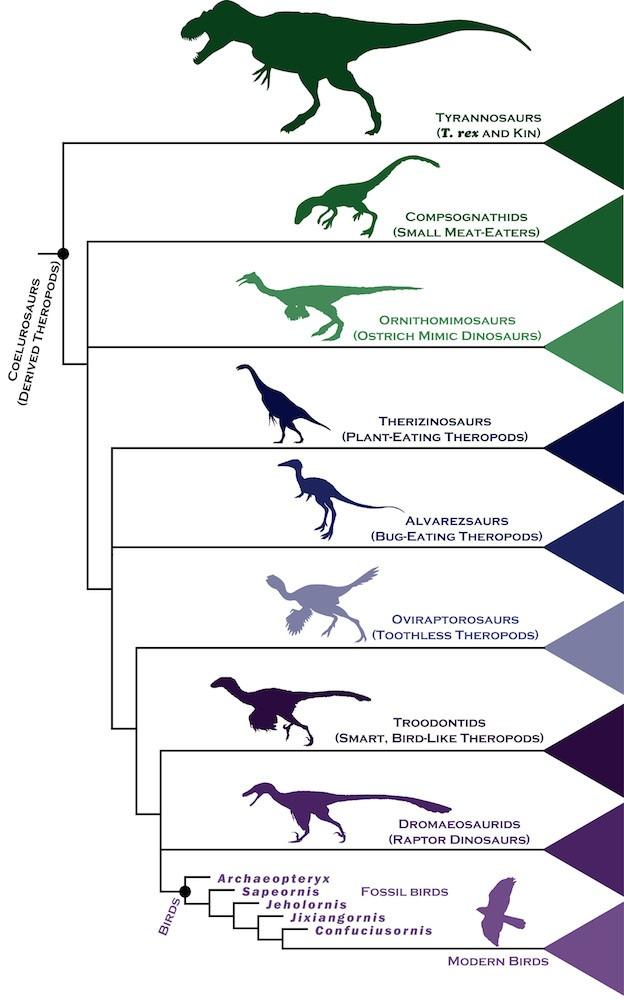 Veja relação entre pássaros e dinossauros (Foto: Reprodução)