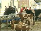 Criadores de gado participam da Pec Nordeste em Fortaleza, CE
