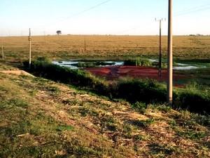 Capivaras costumavam ficar em uma pequena lagoa às margens da rodovia (Foto: Marcos Moreira de Almeida/Cedida)
