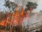 TO está com cinco cidades entre as 10 com mais focos de incêndio no país