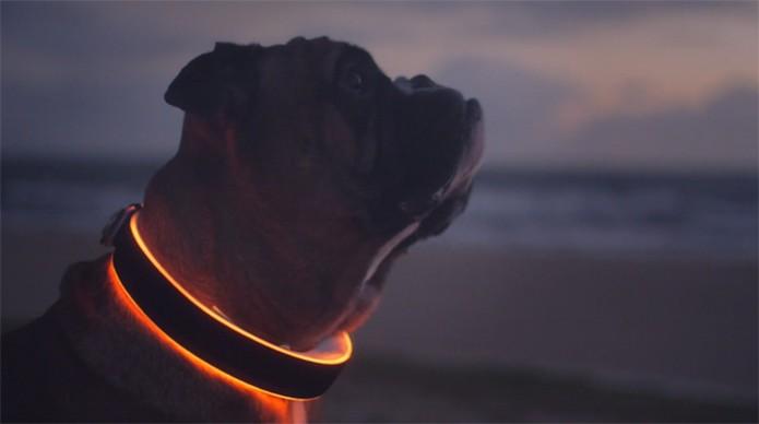 Coleira smart vem equipada com luz LED RGB (Foto: Divulgação/Kickstarter)