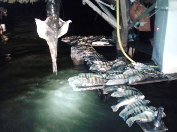 Pescado ilegal apreendio pelo Naturatins (Foto: Naturatins/Divulgação)