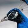 Proteção de Tela: Bright Birds