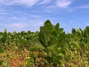 Endividamento rural é preocupação diante de baixos preços da soja