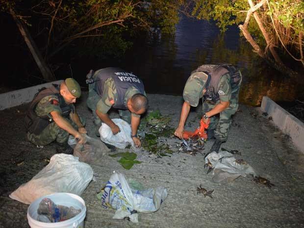 Caranguejos foram soltos no mangue do Cetas, em Cabedelo (Fot Walter Paparazzo/G1)